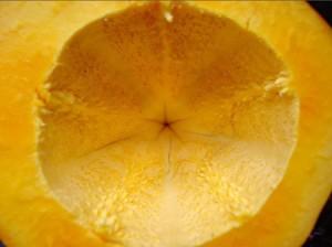 L'Extrait de Papaye Fermentée bio à la Une des Médias